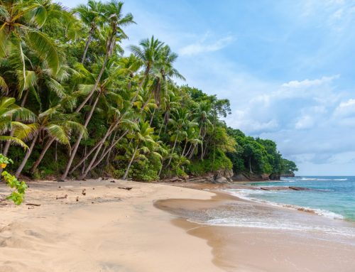 Top Destinations for a tropical Christmas