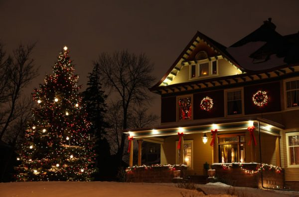 Christmas trees in backyard